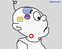 Мозг, речевой аппарат и заикание