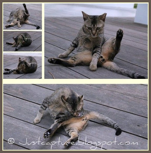 Mosaic Monday, Singapore stray cat