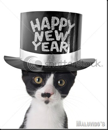 stock-photo-funny-kitten-wearing-a-happy-new-year-hat-41118259