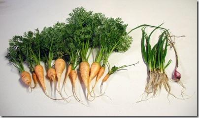 Carrots, Onions