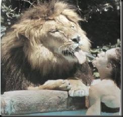 Tippi lion