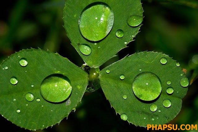 Beautiful_Dew_Drops_Macro_Photographs_1_17.jpg