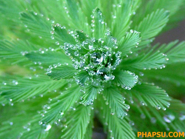 Beautiful_Dew_Drops_Macro_Photographs_1_21.jpg