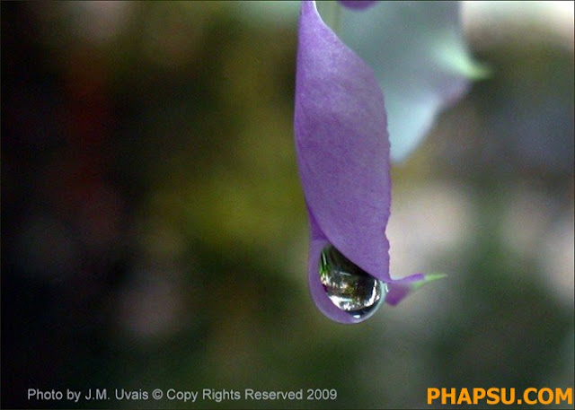 Beautiful_Dew_Drops_Macro_Photographs_1_20.jpg