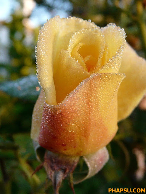 Beautiful_Dew_Drops_Macro_Photographs_1_22.jpg