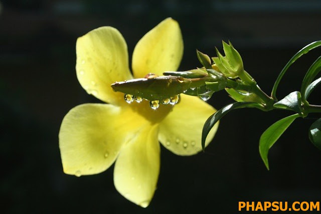 Beautiful_Dew_Drops_Macro_Photographs_1_27.jpg