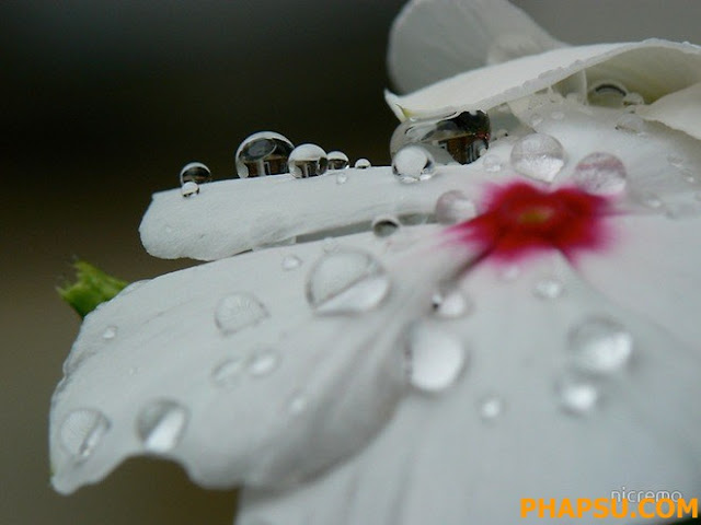 Beautiful_Dew_Drops_Macro_Photographs_1_31.jpg