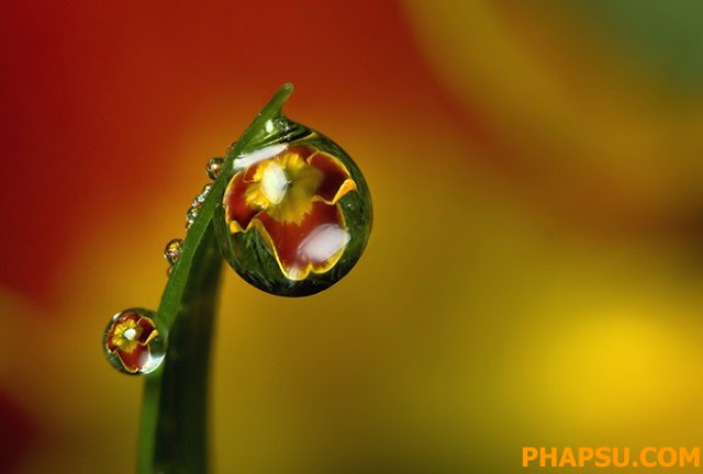 Beautiful_Dew_Drops_Macro_Photographs_1_38.jpg