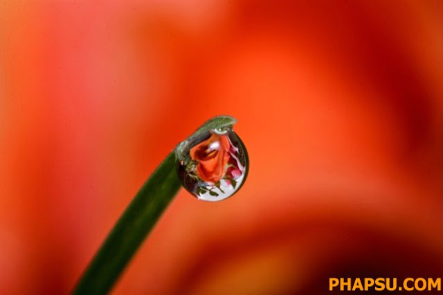 Beautiful_Dew_Drops_Macro_Photographs_1_37.jpg