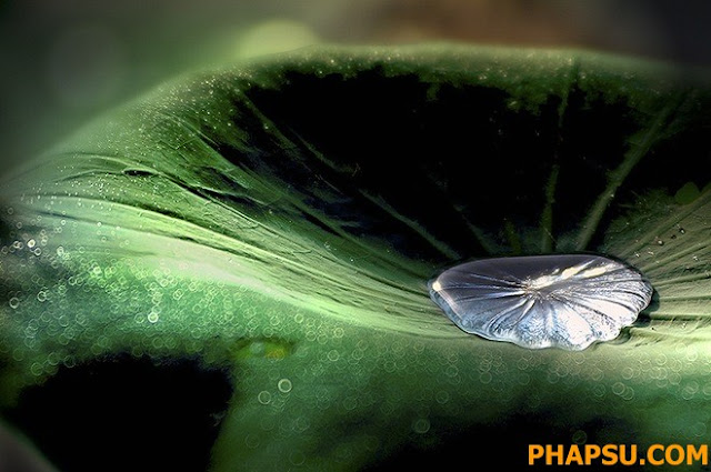Beautiful_Dew_Drops_Macro_Photographs_1_39.jpg
