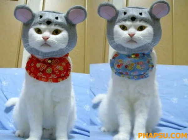 cat_clothes_640_21.jpg