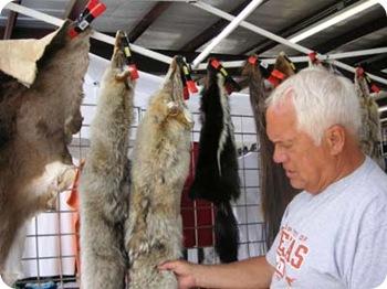 paul-fur