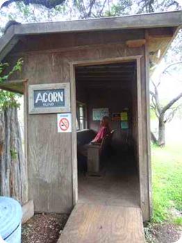 acron-blind-bird