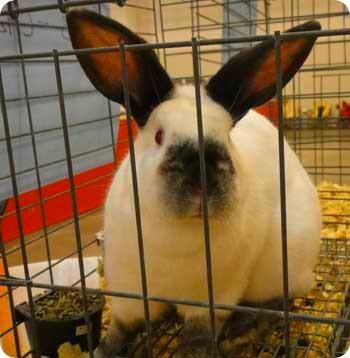 25-bunny