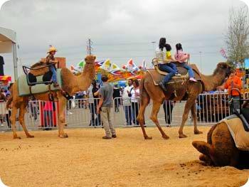 41-camel-ride
