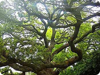 3-tree