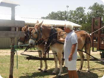20-paul-horse