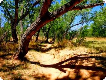 path-pretty