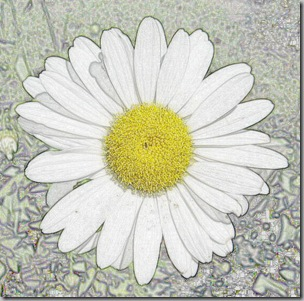 Daisy Colored pencil