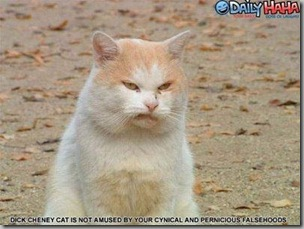 Dick Cheney cat