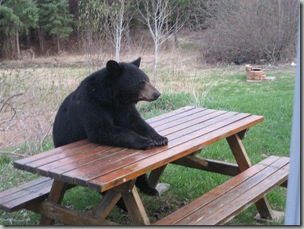Bear with no lunch