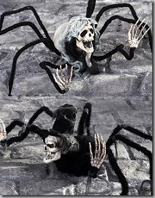 Spider corpse