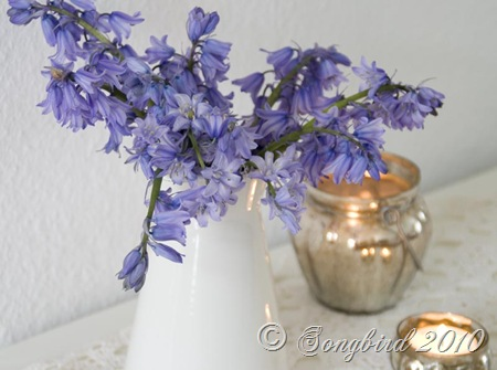 Wild hyacinth vignette