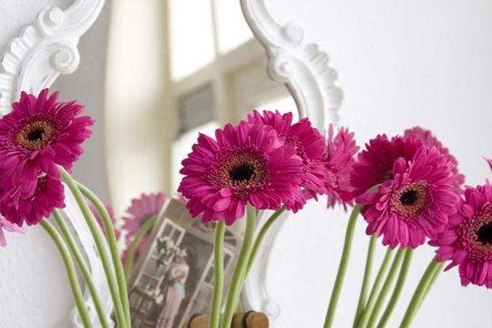 Pink Gerbera Vignette5