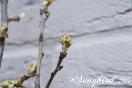 Garden Spring 5