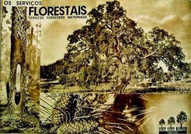 1934 florestas