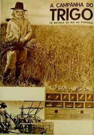 1934trigo