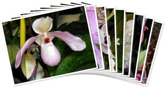 Visualizza orchidee reptiles day 2010