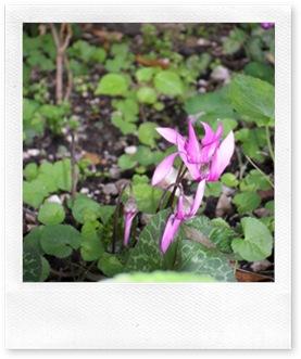 10-08-15 fiorie paesaggio Savassa 19