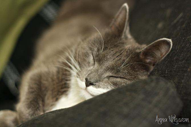 sover på soffan