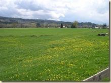 A dandy field