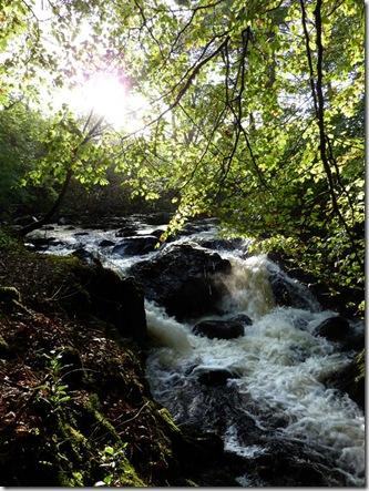 Sutherland Grove falls pt (Large)