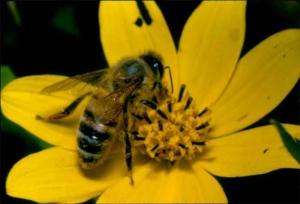 méhecske és haiku