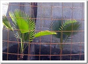 Plants & boug 014-1