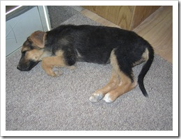 Tasha 3 weeks after being found 004
