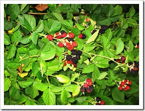 BLOG BERRIES 3
