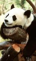 Screenshot of Panda Interactive LWP