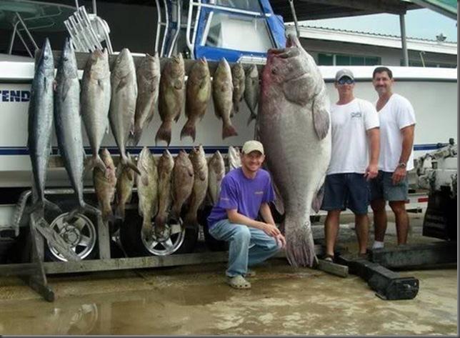 ikan-ikanhasiltangkapan5