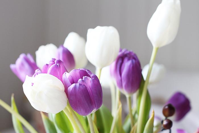 tulipaner-på-en-torsdag3