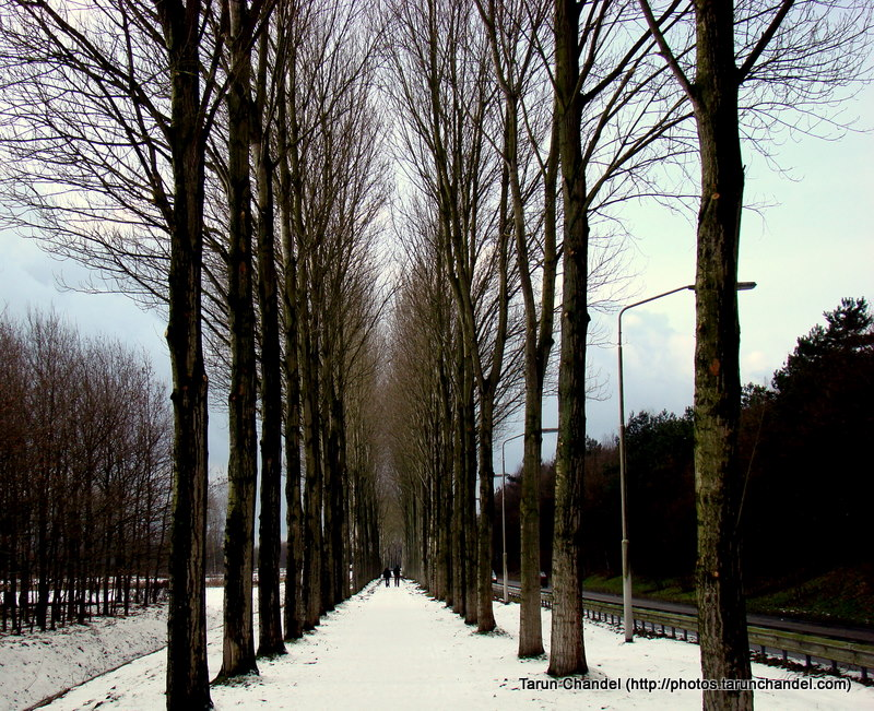Snowy Trees Netherlands Holland Dutch, Tarun Chandel Photoblog