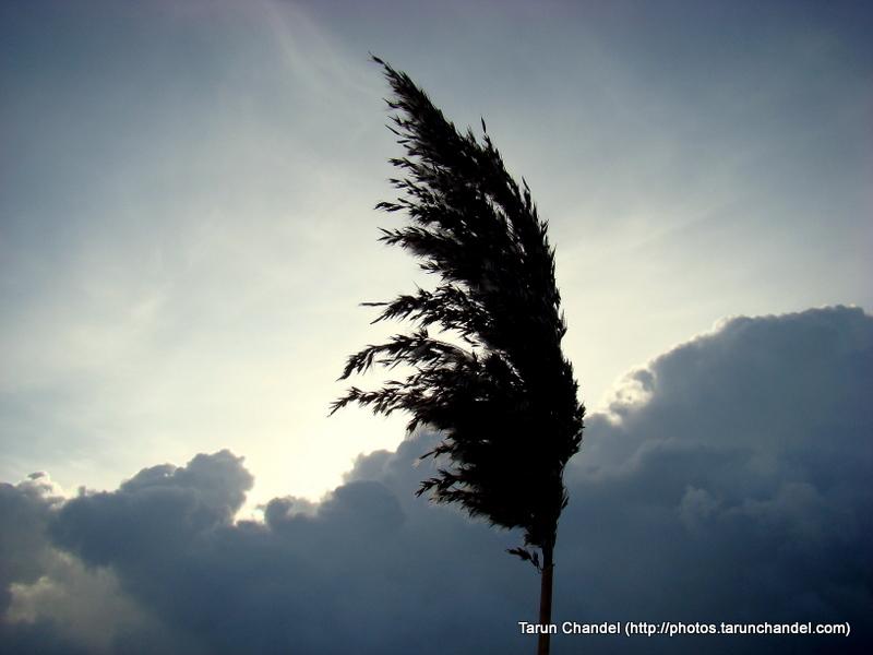 Up Eclipsing The Sun, Tarun Chandel Photoblog