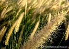 Silky Touch, Tarun Chandel Photoblog