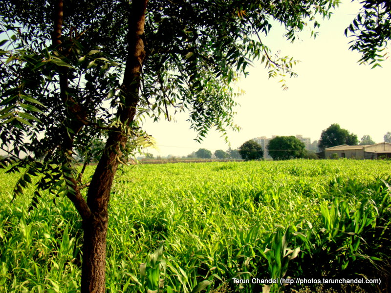 Green India Nashik Trip 2009, Tarun Chandel Photoblog