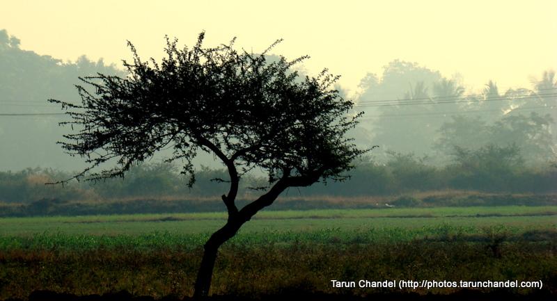 Early Morning, Tarun Chandel Photoblog