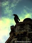 Thirsty Crow, Tarun Chandel Photoblog