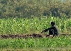 Farmer Nasik, Tarun Chandel Photoblog
